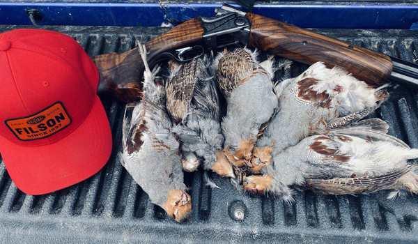 birds-hunting-image-7