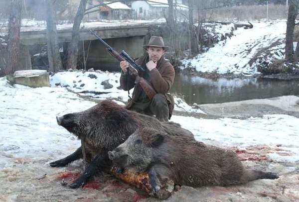boars-image-9