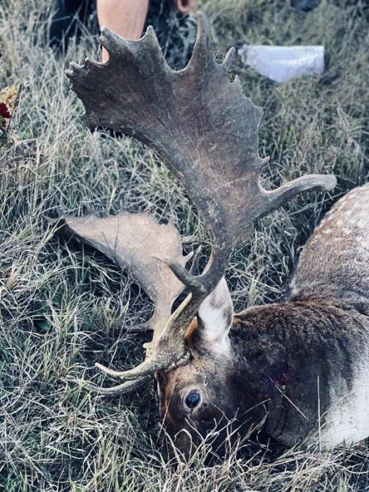 deer-hunting-image-10