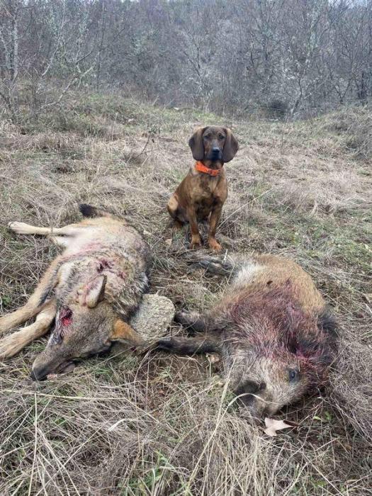 predators-hunting-image-1 (1)