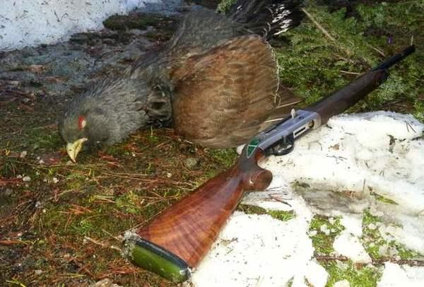 western-capercaillie-image-3